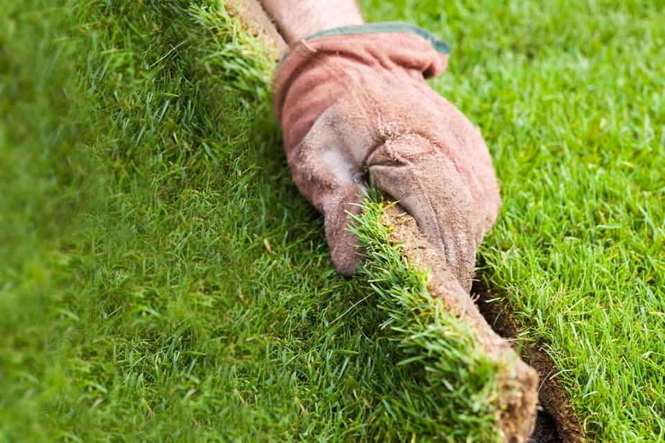 Укладка газона технология